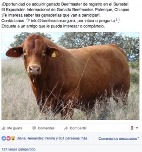 Vender Beefmaster en Facebook
